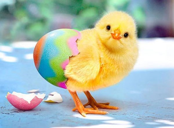 happy easter images 2016